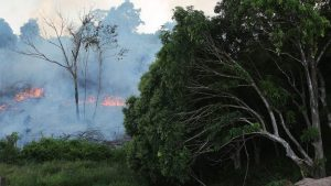 Flames might have influenced up to 85 percent of compromised Amazon species